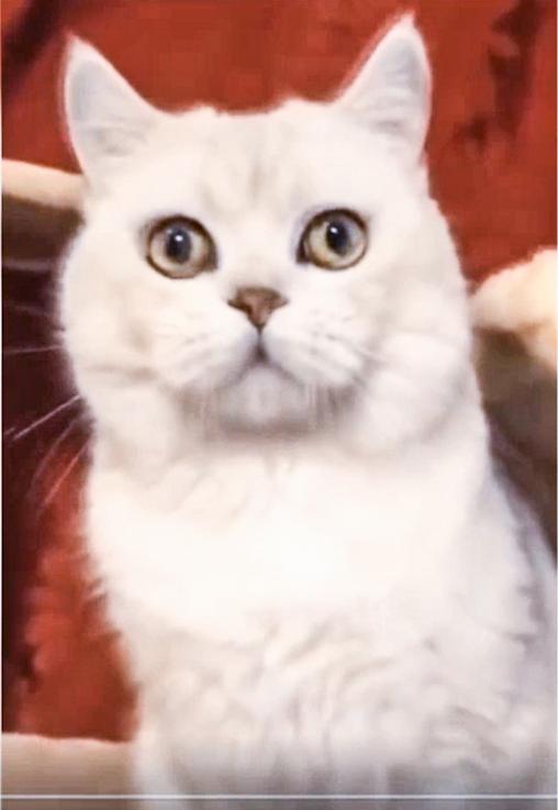 живой котик